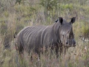 Big guns to probe rhino slaughter