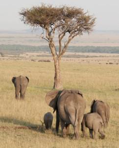 DRC elephant refugees flee to Uganda