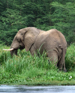 Endangered elephants found dead