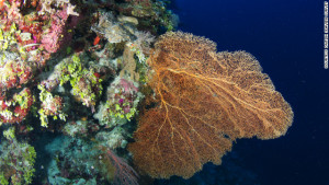 Great Barrier Reef found to have thriving deep water coral